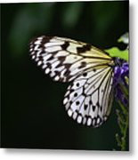 Sun Shining Through The Wings Of A Rice Paper Butterfly Metal Print