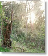 Sun Shining Through Trees In A Mysterious Forest Metal Print