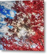 Sun Sky Clouds And A Red Maple Metal Print