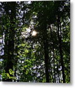 Sun Through Trees In Forest Metal Print