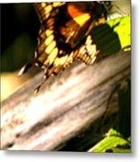 Sunbathing Butterfly Metal Print