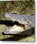 Sunbathing Croc Metal Print