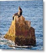 Sunbathing Sea Lion Metal Print