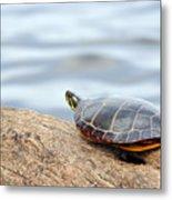 Sunbathing Turtle Metal Print