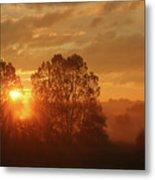 Sunbeam Through Cottonwoods Metal Print