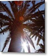 Sunbeams Through The Palms Metal Print