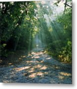 Sunbeams Through Trees Metal Print