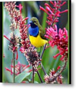 Sunbird Metal Print by Holly Kempe