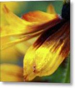 Sunburst Petals - 2 Metal Print