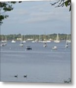 Sunday Morning Swim On Manhasset Bay In Port Washington, Ny Metal Print