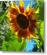 Sunflower 101 Metal Print