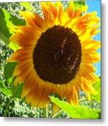 Sunflower 103 Metal Print