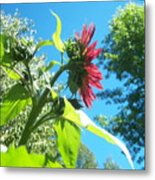 Sunflower 105 Metal Print