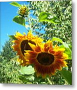 Sunflower 106 Metal Print