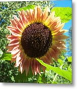 Sunflower 107 Metal Print