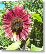 Sunflower 110 Metal Print