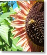 Sunflower 112 Metal Print