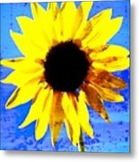 Sunflower 12 Metal Print