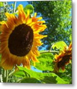 Sunflower 123 Metal Print