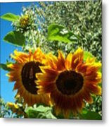 Sunflower 132 Metal Print