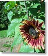 Sunflower 134 Metal Print