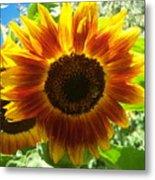 Sunflower 140 Metal Print