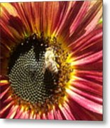 Sunflower 145 Metal Print