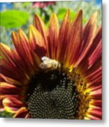 Sunflower 146 Metal Print