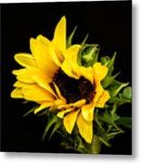 Sunflower 2 Metal Print
