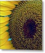 Sunflower-2 Metal Print