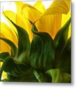 Sunflower 2015 2 Metal Print