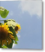 Sunflower 3 Metal Print