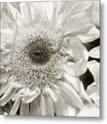 Sunflower 4 Metal Print
