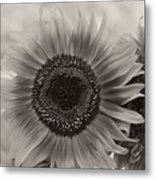 Sunflower 6 Metal Print