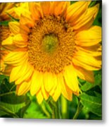 Sunflower 7 Metal Print