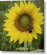Sunflower Among The Weeds Metal Print
