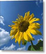 Sunflower And Blue Sky Metal Print