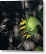 Sunflower And Shadow Metal Print