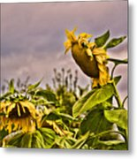 Sunflower Art 2 Metal Print