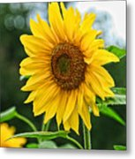 Sunflower Art 3 Metal Print