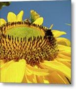 Sunflower Art Prints Honey Bee Sun Flower Floral Garden Metal Print