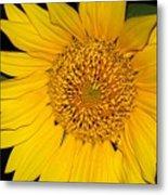 Sunflower At Dusk Metal Print
