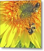 Sunflower Bees Metal Print