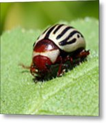 Sunflower Beetle Metal Print
