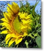Sunflower By Design Metal Print
