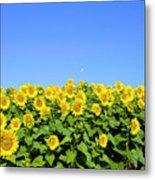 Sunflower City Metal Print