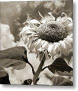 Sunflower Metal Print