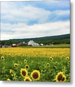 Sunflower Country Landscape  Metal Print