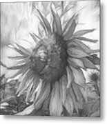 Sunflower Dawn Black And White Drawing Metal Print