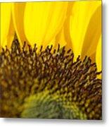 Sunflower Detail Metal Print